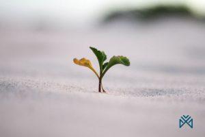 ابدأ في تطوير الأفكار الإيجابية